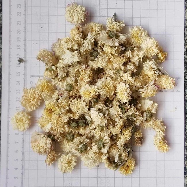 Hình ảnh Cúc hoa khô